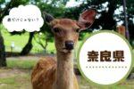【たんぽぽツアー】奈良県は本当に国のまほろば?地元民の奈良のイメージとは?